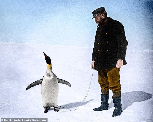 Julian Sancton ha escrito un libro épico sobre la expedición científica de Adrien de Gerlache a la Antártida en 1897. En la foto: Adrien de Gerlache con un pingüino emperador