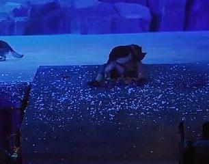 Los lobos fueron filmados persiguiendo a los actores por un escenario e incluso corriendo entre la audiencia durante una presentación en vivo en China, hablando de temores de seguridad.