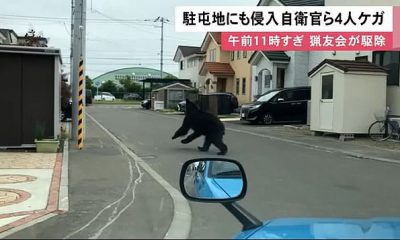 El oso pardo es visto saltando por una calle residencial frente a un automóvil en Sapporo el viernes.