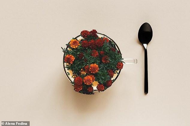 Alena Fedina, de 28 años, de Kaliningrado, Rusia, creó imágenes que muestran flores que brotan de conos de helado, tazones y tazas de té después de tocar fondo durante la pandemia cuando se sintió suicida después de aumentar de peso.