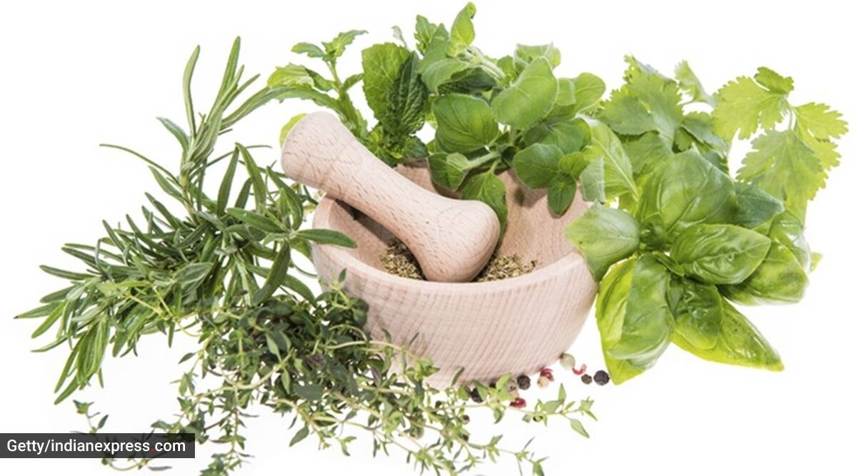 steam inhalation, nasal congestion, how to inhale steam, indianexpress.com, indianexpress, herbs, ayurvedic herbs, dr dixa bhavsar,