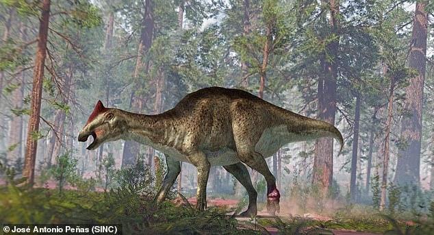 Se descubrió que un dinosaurio con pico de pato descubierto en la Patagonia argentina en 1984 tenía un tumor en el pie y dos dolorosas fracturas en la cola, como se muestra en la imagen.