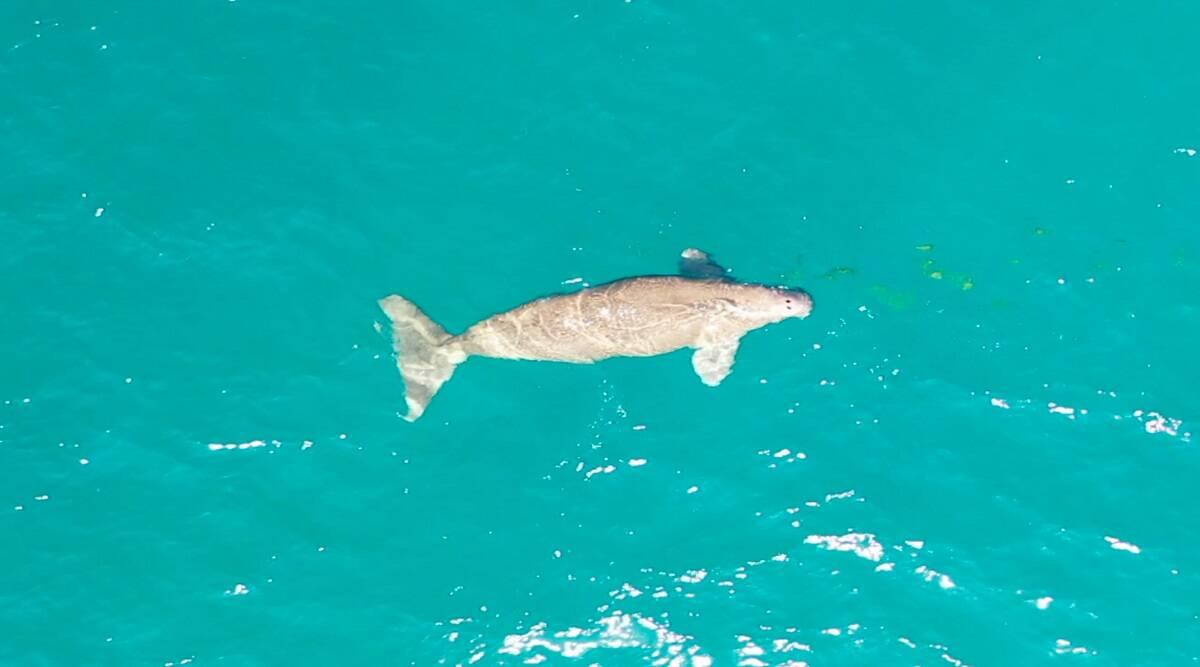 Dugong survey