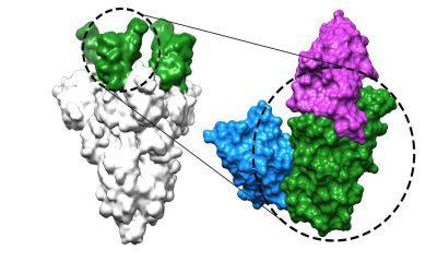 newly developed nanobodies
