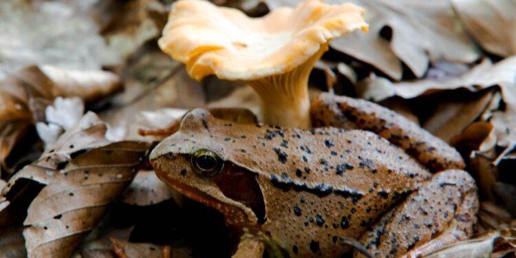 frog mushroom