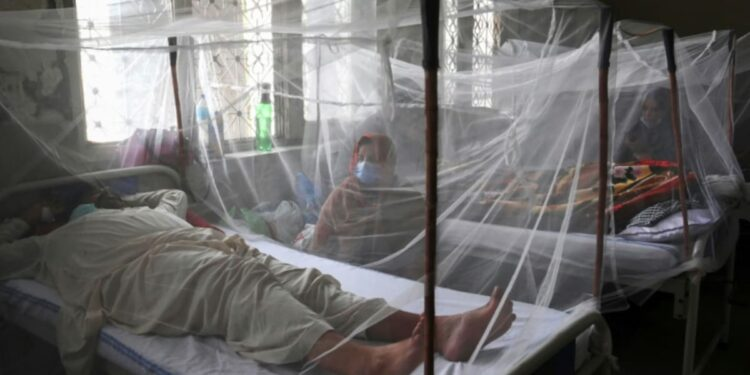 'Un viaje increíble': un estudio ofrece esperanza para el tratamiento del dengue